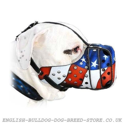 Leather Dog Muzzle for Old Victorian Bulldog with USA Flag Paint