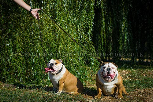 English Bulldog Leash Multi-Purpose with Six Modes of Use