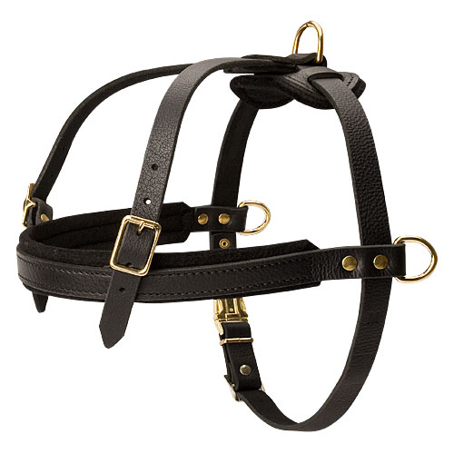 Leather Dog Harness for English Bulldog, Best for Pulling Work