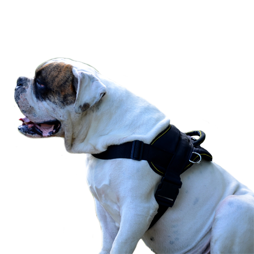 Nylon Dog Harness for American Bulldog, Multipurpose Usage