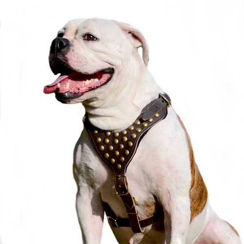 Walking Leather Dog Harness with Studs for American Bulldog