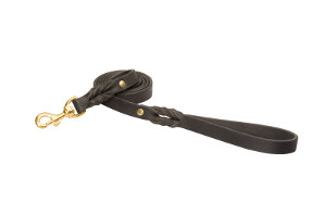 Leash for English Bulldog