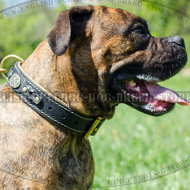 Leather Collar for Boxer with Nappa Lining and Royal Decorations