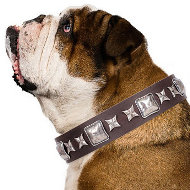 "Leather Collar for English Bulldog ""Perfect Impression"" Artisan"