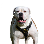 Dog Tracking Harness for American Bulldog Walking and Training