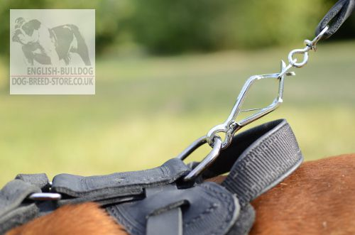 English Bulldog Harness