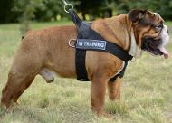 Nylon Dog Harness for Bulldog | Dog Training Harness, Best
