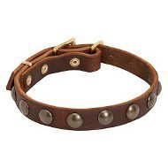 Pug Dog Collar of Narrow Leather with Row of Round Brass Studs