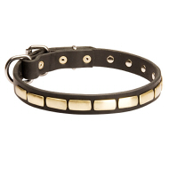 Leather Dog Collar with Decorative Plates for English Bulldog