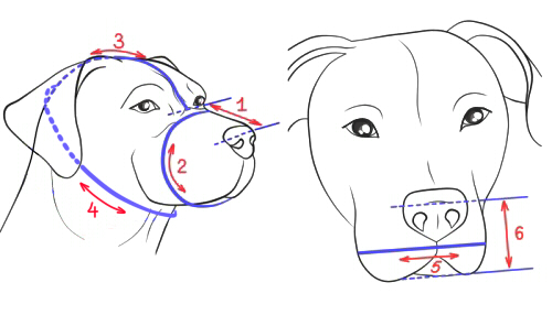 How to Size Dog Muzzle