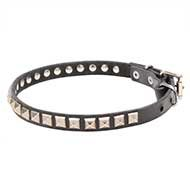 Thin Leather Dog Collar with Kingly Studs for English Bulldog