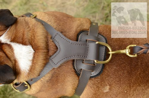 Bulldog Harness UK
