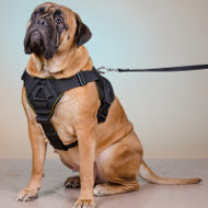 Nylon Dog Harness for Bullmastiff, Multipurpose All-Weather Use